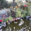 Zoom sur un jardin Refuge LPO dans l'Hérault